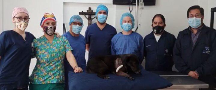 Dueños de una perrita que fue atropellada buscan ayuda para poder llevarla al veterinario