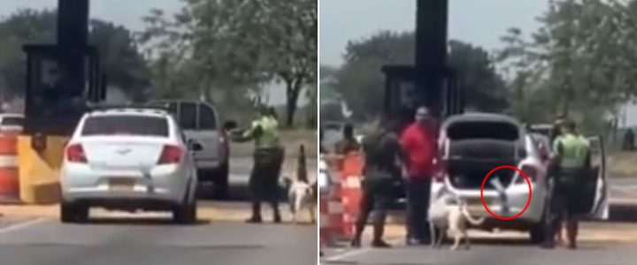 Policías creyeron que conductor llevaba un cadáver en el carro y resultó ser una mano de juguete