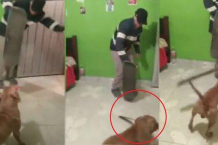 Perro amenaza a dueño con un machete y causa terror en redes