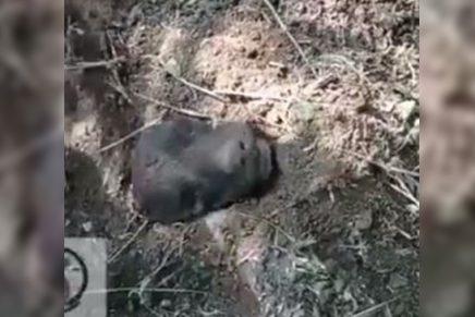 Perro enterrado vivo Foto Twitter