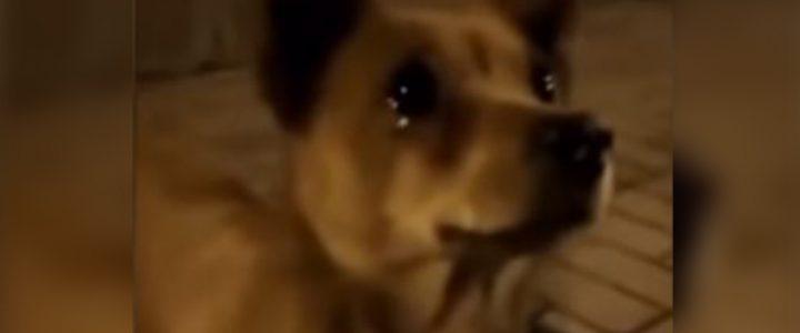 Video: Perrito callejero llora después de que una persona le da comida