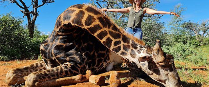 Indignación por mujer que cazó una jirafa y publicó fotos en redes exhibiendo el corazón