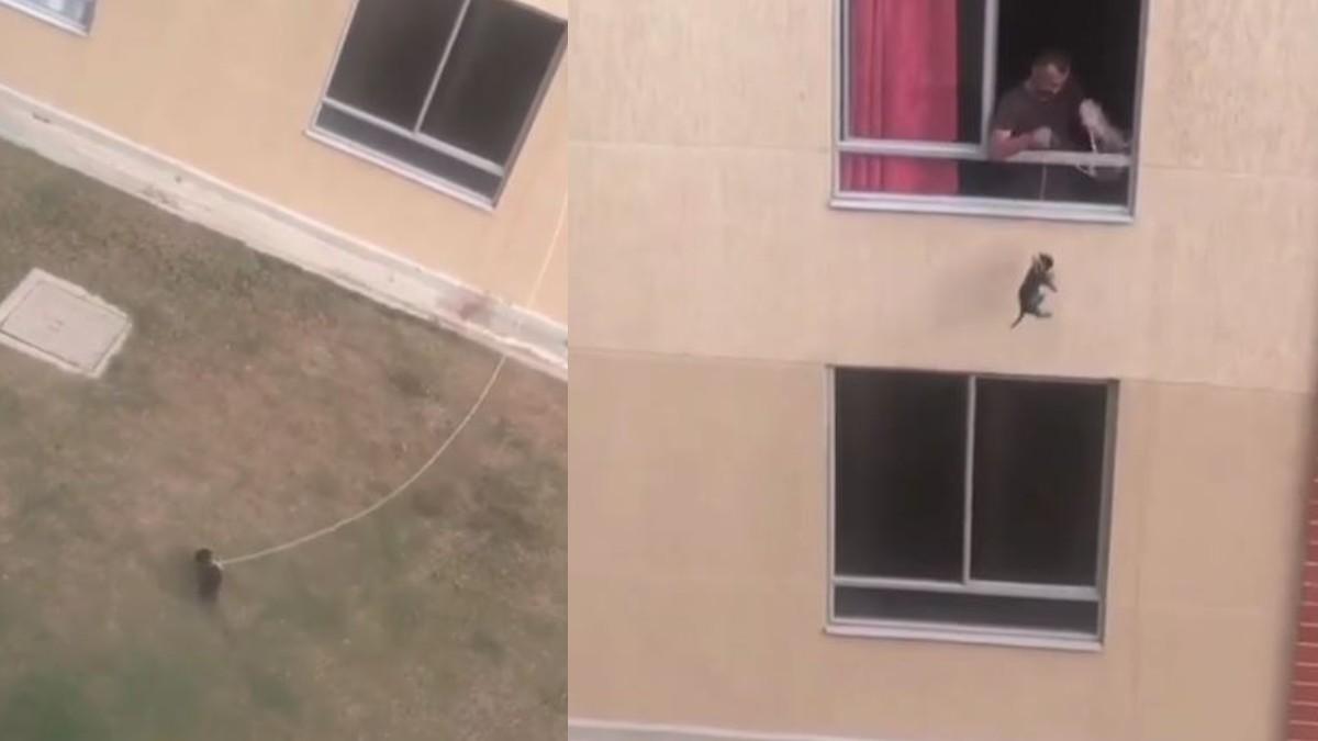 Hombre le amarró el cuello a su perro y lo paseó desde el segundo piso de su casa