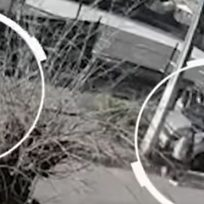 Madre entregó a su hijo a la Policía cuando se dio cuenta que estaba robando