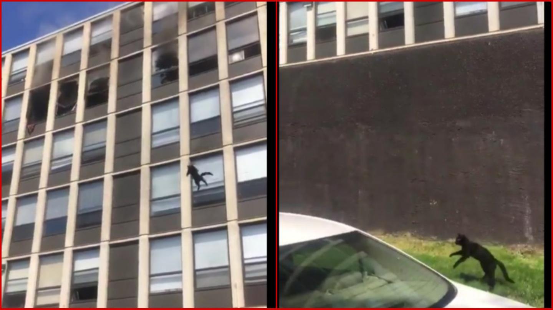 Captan el momento en que un gato se salva tras saltar desde un edificio incendiado