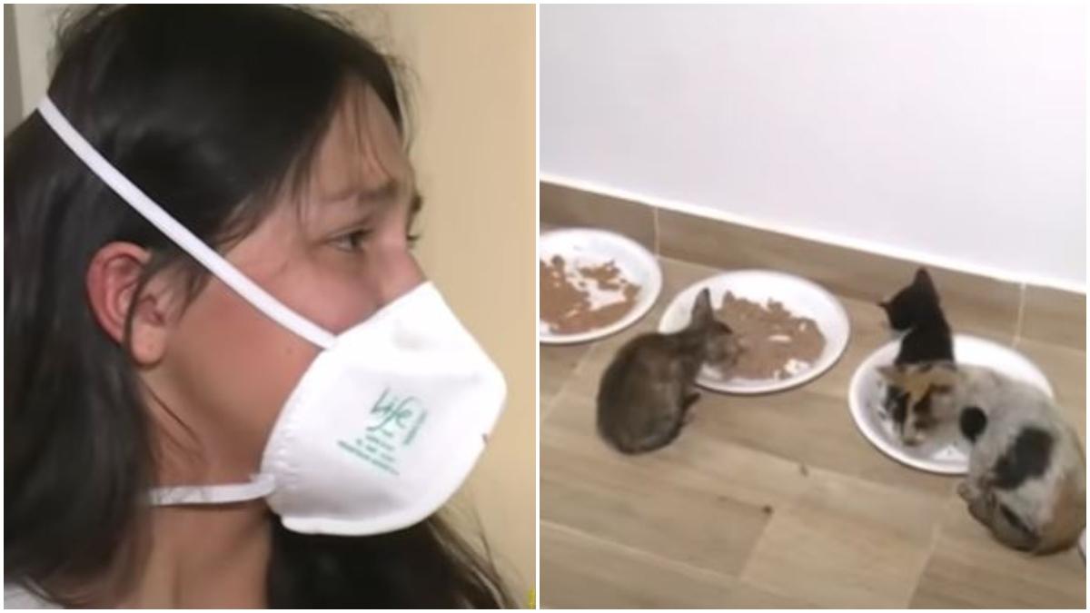 Una joven quería adoptar 30 gatos y le enviaron 400; algunos de ellos  muertos