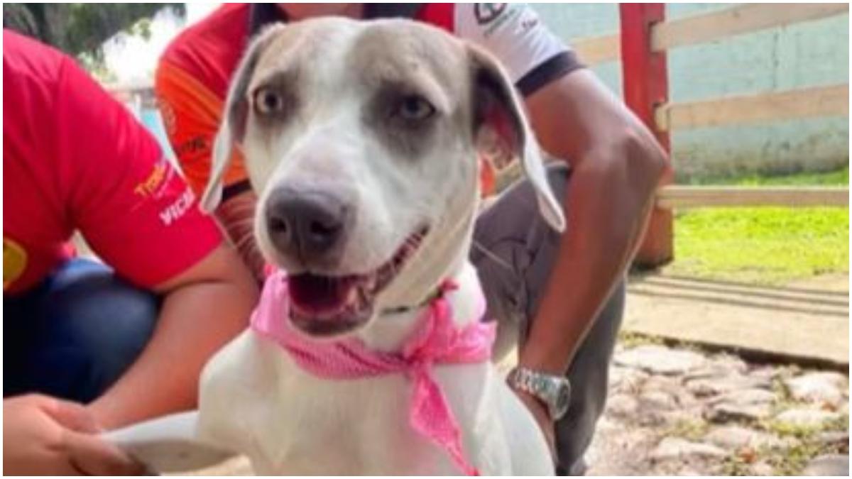 Perrita fue rescatada en Valle _ Foto_ Instagram