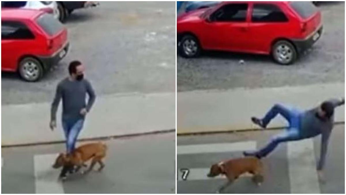 Perro atropella a un hombre _ Foto_ captura video