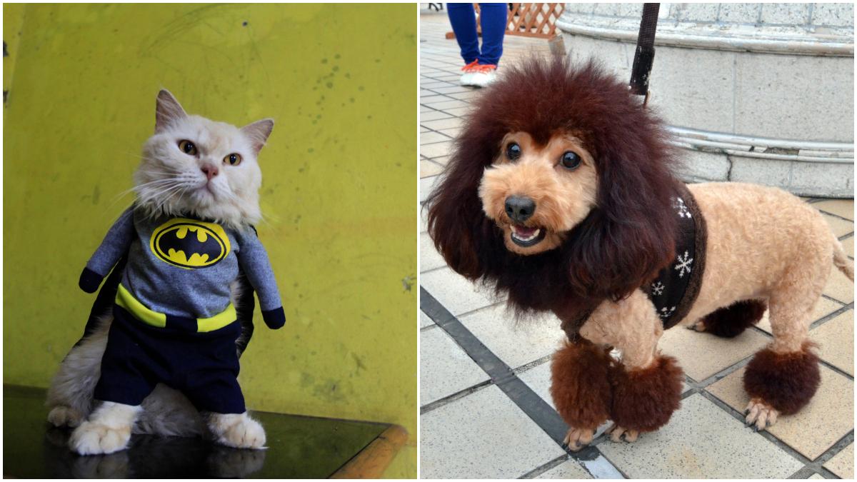 Disfraces para mascotas _ Foto_ Getty Images